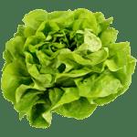 Salad Processing - Cox & Plant